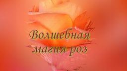Волшебная магия роз