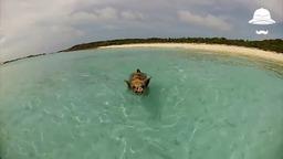Свиньи захватили остров.