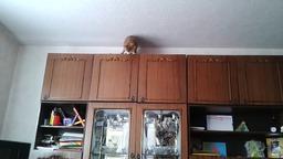 Кошка-паркурщица