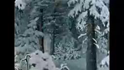 ФИЛЬМ МУЛЬТИК ДвенадцатьмесяцевСоветскийновогодниймультфильм 1956 ГОД!!