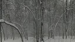 Ежи в снегу