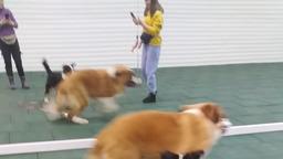 Ёжик играет с Боней