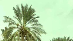 """""""Окультуренный"""" оазис. Тунис"""