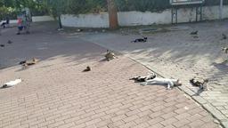 Кошки Туниса