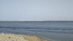 Фламинго, Тунис