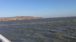 чайки над Керченским проливом