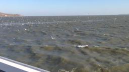 чайки над Керченским проливом днем