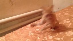 Маленький Котик балуется