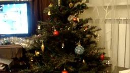 """Котенок """"свил"""" себе гнездо на новогодней елке"""