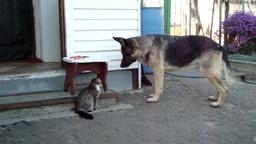 Кошачьи забавы