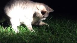 Ночная охота Моники-Маруси